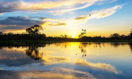 40 días de oración y reflexión hacia el Sínodo sobre la Amazonía